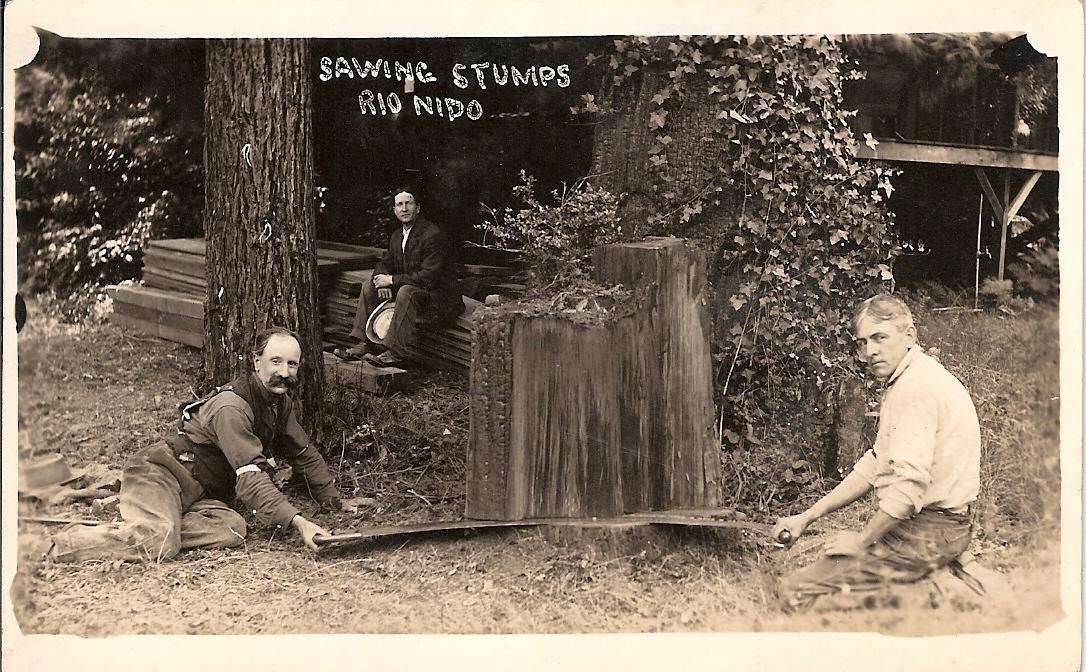 sawing-stumps